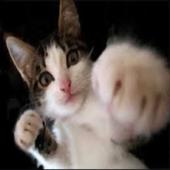 Funny pics cats icon