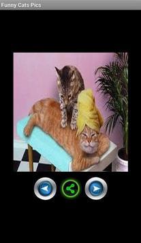 Funny pics cats poster