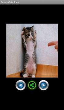 Funny pics cats screenshot 1