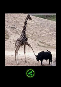 Funny photos !!! apk screenshot