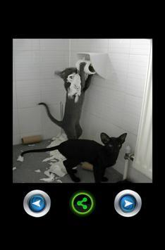 Funny pictures 14 apk screenshot