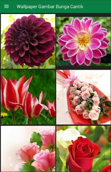 Unduh 9900 Koleksi Wallpaper Bunga Bunga Cantik HD Gratid
