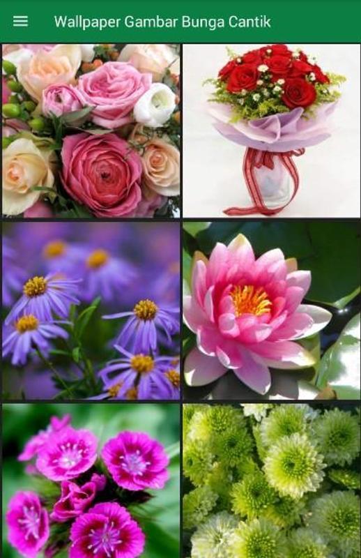 Gambar Bunga Cantik Untuk Wallpaper Wa Warna Warni Gambar