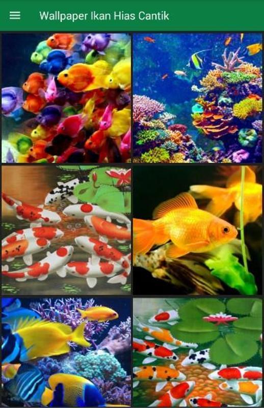 Wallpaper Ikan Hias Cantik For Android Apk Download
