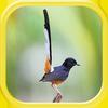 Masteran Burung Gacor Juara icon