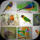 Bird Art Frames APK