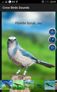Crow Birds Sounds screenshot 4