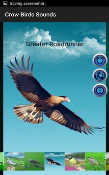 Crow Birds Sounds screenshot 5