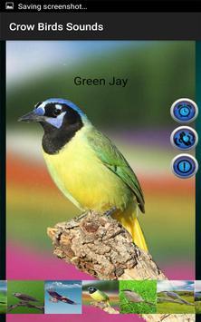 Crow Birds Sounds screenshot 6