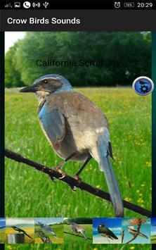 Crow Birds Sounds screenshot 8