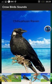 Crow Birds Sounds screenshot 9