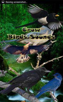 Crow Birds Sounds poster