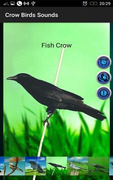 Crow Birds Sounds screenshot 11