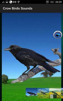 Crow Birds Sounds screenshot 1