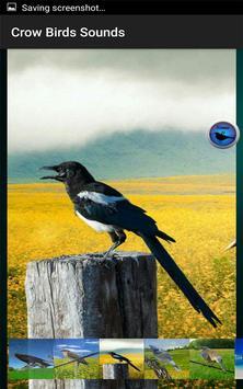 Crow Birds Sounds screenshot 2
