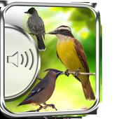 Flycatcher Birds Sounds icon