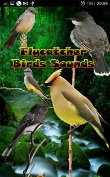 Flycatcher Birds Sounds poster