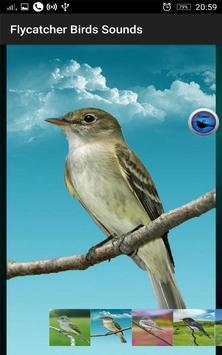 Flycatcher Birds Sounds apk screenshot
