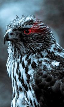 bird of prey live wallpaper poster