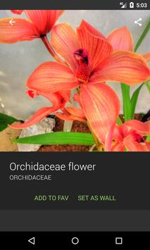 Orchidaceae Wallpapers screenshot 1