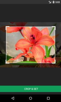 Orchidaceae Wallpapers screenshot 2