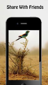 Bird Wallpapers apk screenshot