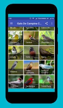 Canto De Azulao apk screenshot