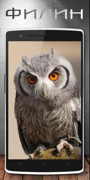 Хищные Птицы - Обои apk screenshot
