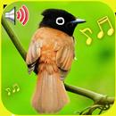 Bird Sounds: Different Bird Sounds-APK