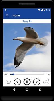 Birds Relaxing Sounds apk screenshot