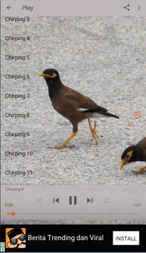 Chirping Common Myna screenshot 1