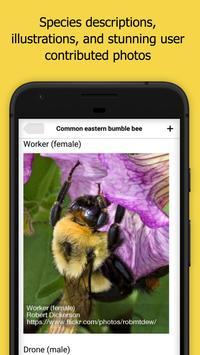 Bumble Bee Watch 截图 1