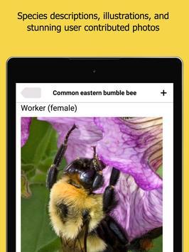 Bumble Bee Watch 截图 6
