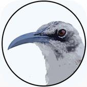 BirdsEye Galápagos icône