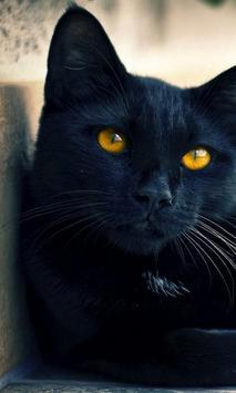 black cat live wallpaper poster