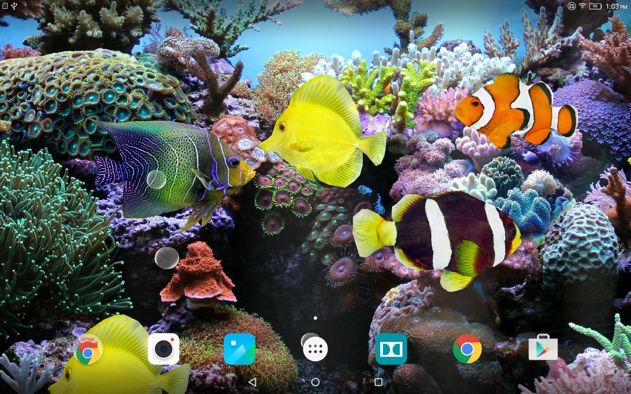 Download Live Wallpapers Hd: Coral Fish 3D Live Wallpaper APK Download