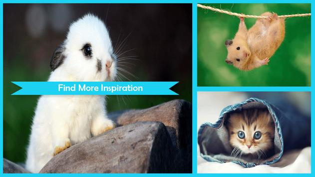 Cute Animal Wallpapers poster