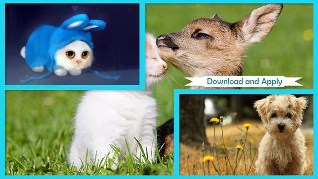 Cute Animal Wallpapers apk screenshot