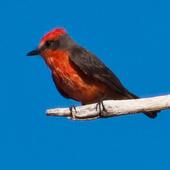 Exotic Bird Breeds Game icon