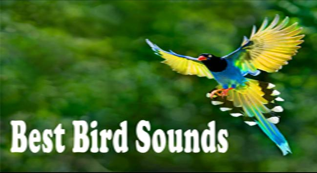Bird Sounds Ringtones 2017 poster