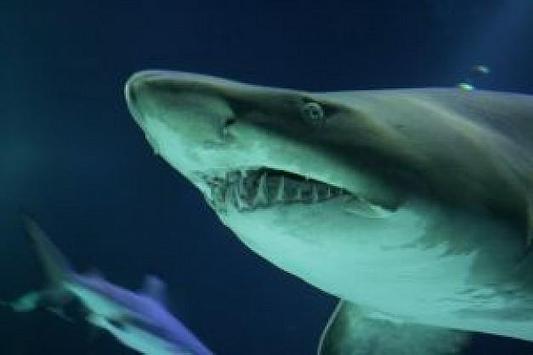 Blue Shark Attack Live Wallpaper Poster Screenshot 1