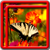 Best Butterfly Live Wallpapers icon