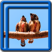 Forest Birds Live Wallpapers icon