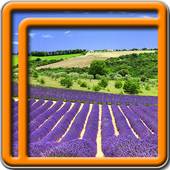 Lavender Live Wallpapers icon