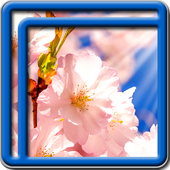 Sakura Tree Live Wallpapers icon