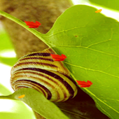 Louis the Snail LWP icon
