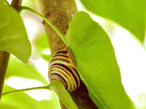 Louis the Snail LWP screenshot 2