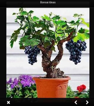 bonsai idea screenshot 1