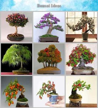 bonsai idea screenshot 4