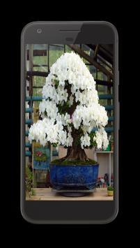 Bonsai Tree Design Ideas Offline apk screenshot